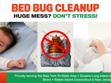 bed bugs cleaning